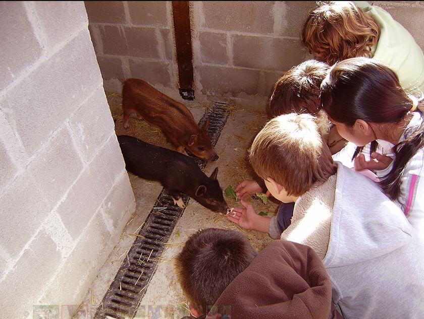 Los beneficios de pasar un día en la Granja escuela