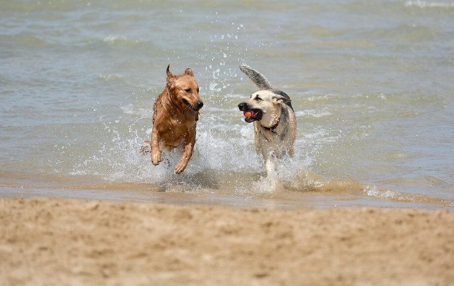vacaciones con perro en cantabria
